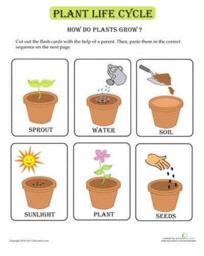 Worksheets: Plant Life Cycle Flash Cards / Preschool items