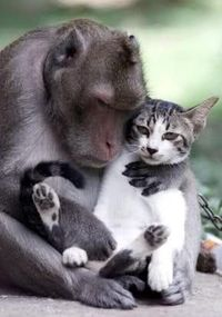 Love the expression on the kitty's face...