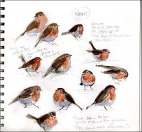 Excellent studies of Robins