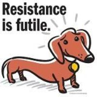 Can't resist Doxies!