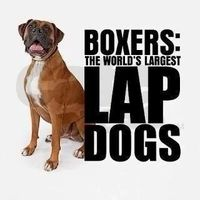 Boxers: The Worlds Largest Lap Dogs