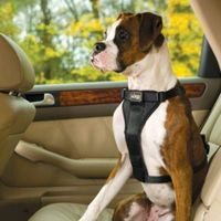 Tru-Fit Smart Harness with Seat Belt Loop from Frontgate.
