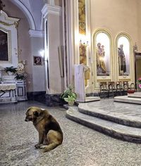 Heartbroken dog attends mass daily