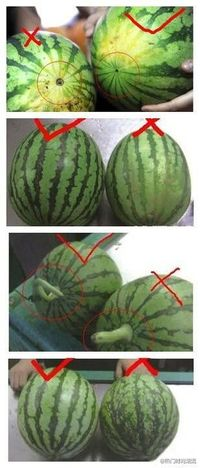 how to choose watermelon