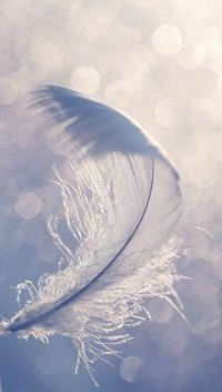 feathers images - Photos of feathers - Luscious blog.jpg