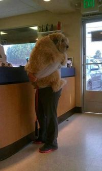 Scared at the vet.