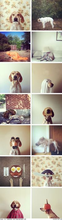 Maddie the coonhound in Halloween costumes // FOXINTHEPINE.COM