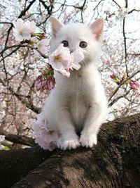White kitten in a tree