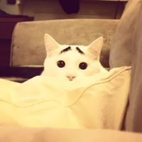 Meet Sam, The Cat With Eyebrows | Bored Panda