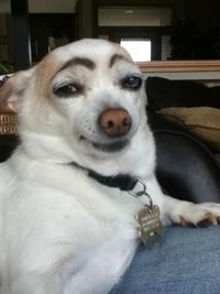 Bored? Draw eyebrows on your dog and laugh until his next bath.. hahahaha!